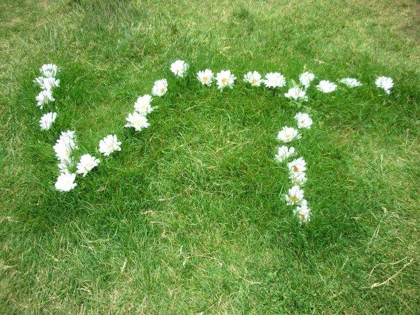 vt-daisy